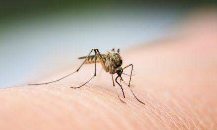 Prévention contre les moustiques